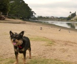 New #park for Shaggy!