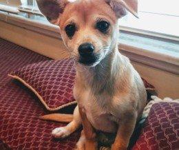 I got a #puppy yesterday. Meet Chewie! – John