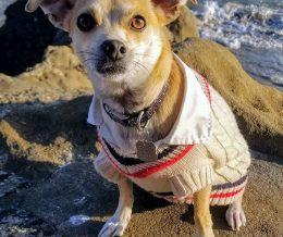 #CashtagContest entry: Chewie in Malibu #dressmypet