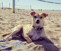 #CashtagContest entry: Chewie in Playa Del Rey #toocute